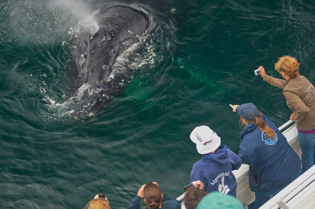 photo of humpback whale spouts near whale watchers