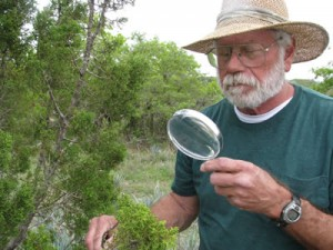 Man observing juniper with magnifying glass
