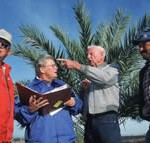 Four people outside in front of a palm tree talking and pointing at something.