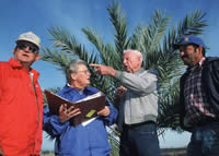 Four people standing in front of a palm tree talking. One has a notebook.