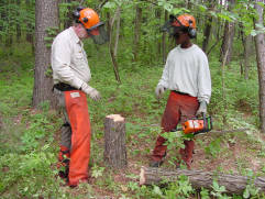 One man teaching another how to use a chainsaw to thin trees. They stand in front of a tree stump.